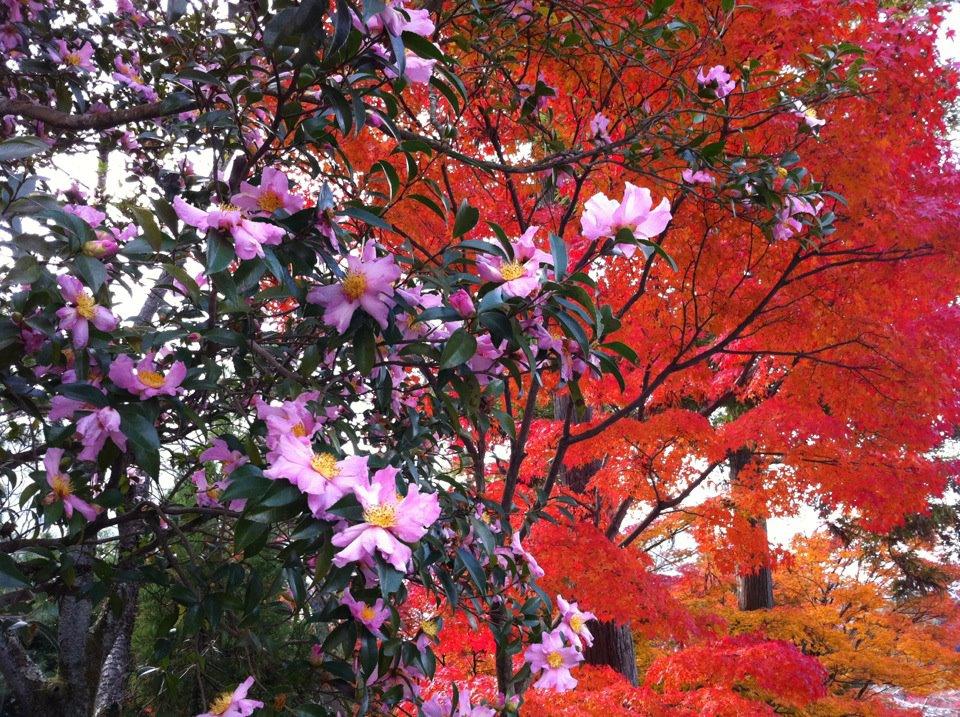 Kyoto Autumn, 2011