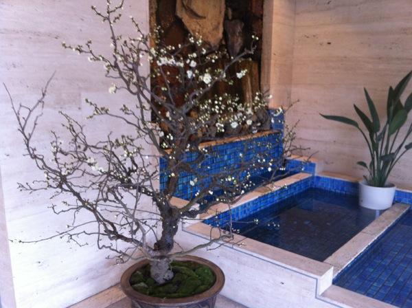 Kyoto Izutsu Building Lobby Plum Blossoms
