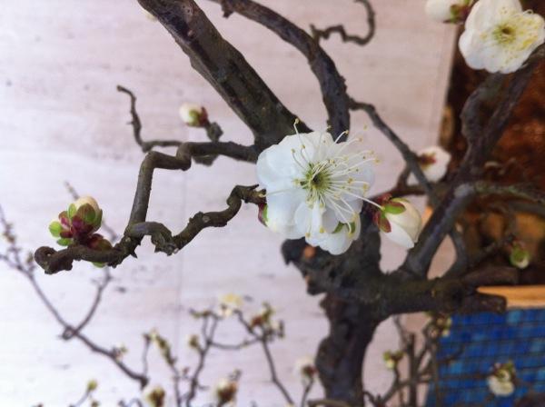 izutsu-samegai-bldg-lobby-plum-blossoms-2012-3