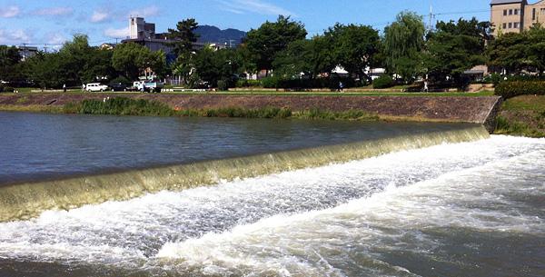 Kamo River Nutria 'Shooting the Rapids'