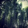 arashiyama_03