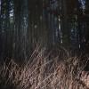 arashiyama_06